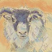 Sheep With Horns Art Print