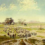 Sheepherding Montana Art Print