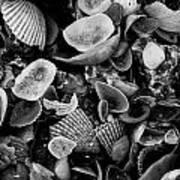 Shell Collection 3 Art Print