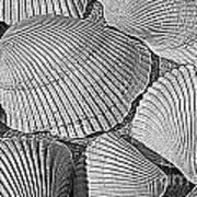 Shell Effects 10 Art Print