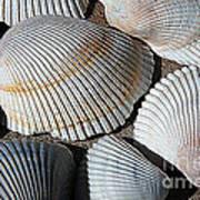 Shell Effects 5 Art Print