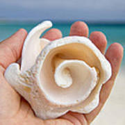 Shell In Hand Cozumel Art Print