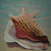 Shell Three - 3 In A Series Of 3 Art Print