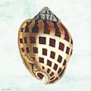 Shell Treasure-b Art Print