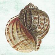 Shell Treasure-c Art Print