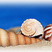 Shells In Sand Art Print