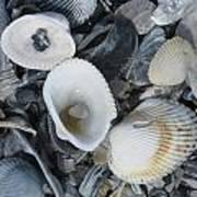 Shells In Shells 2 Art Print
