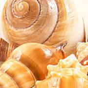 Shells Print by Jean Noren