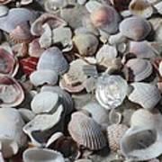 Shells On Treasure Island Art Print by Carol Groenen
