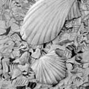 Shells One Art Print