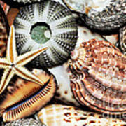 Shellscape Art Print