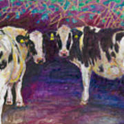 Sheltering Cows Art Print