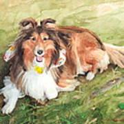 Sheltie On Lawn Watercolor Portrait Art Print