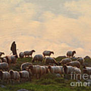 Shepherd With Sheep Standard Size Art Print