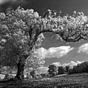 Shepton Tree Art Print
