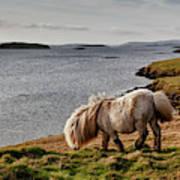 Shetland Pony At Shore  Shetland Art Print