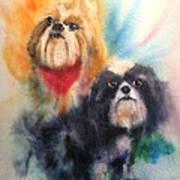 Shih Tsu Siblings Print by Alan Goldbarg