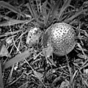 Shiny Mushroom Art Print
