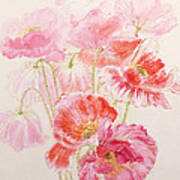 Shirley Poppies Art Print