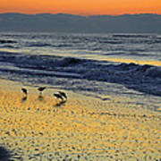 Shorebirds At Dawn Art Print