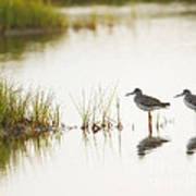 Shorebirds At Dusk Art Print