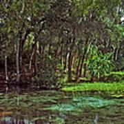 Shoreline. Rainbow Springs. Art Print