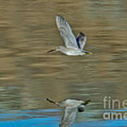 Short-billed Dowitcher And Reflection Art Print