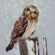 Short-eared Owl   Art Print