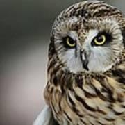 Short Eared Owl Portrait Art Print