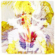 Show Girl Hibiscus Art Print