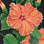 Showy Hibiscus Art Print