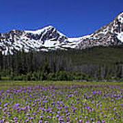 Showy Penstemon Wildflowers Sawtooth Mountains Art Print
