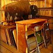 Shy Buffalo Art Print