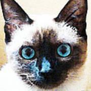 Siamese Cat Art - Black And Tan Art Print by Sharon Cummings