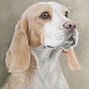 Beagle Portrait Art Print