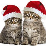 Siberian Kittens In Hats Art Print
