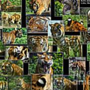 Siberian Tiger Collage Art Print