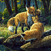 Red Foxes - Sibling Rivalry Art Print