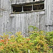 Side Of Barn In Fall Art Print