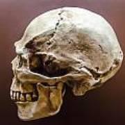 Side Profile View Of Human Skull   Art Print