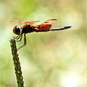 Side View Of A Calico Pennant Art Print