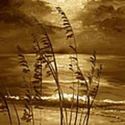 Sienna Moonlight Art Print