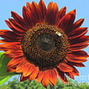 Sienna Sunflower Art Print