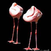 Siesta In Pink Art Print