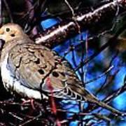 Silent Dove Sm  Art Print