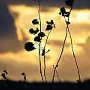 Silhouette At Sunset Art Print