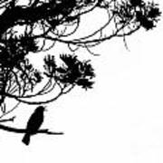 Silhouette Of Singing Common Blackbird In A Tree Art Print by Stephan Pietzko