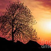 Silhouette Of Tree Art Print