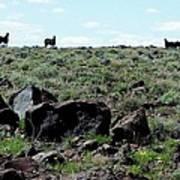 Silhouette Of Twin Peaks Wild Horses Ne California Art Print