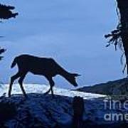 Silhouetted Deer Art Print